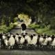 Northumberland-Family-Celebration-Sheep